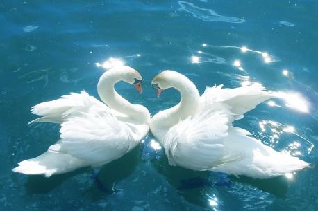 Love_Birds-wallpaper-9814446
